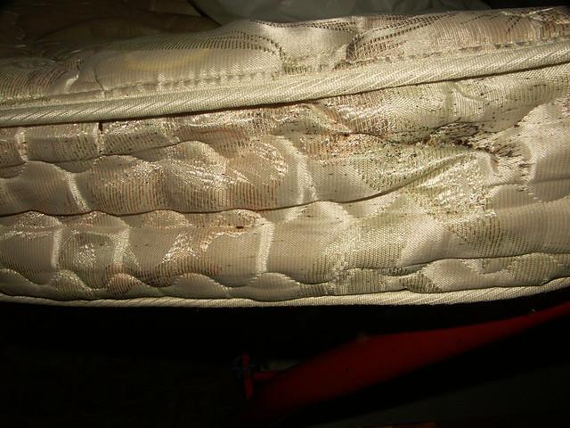 Bed Bug Mattress Encasement Bed Bath Beyond