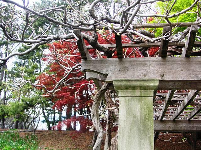 Garden gateway flickr photo sharing for Garden gateway