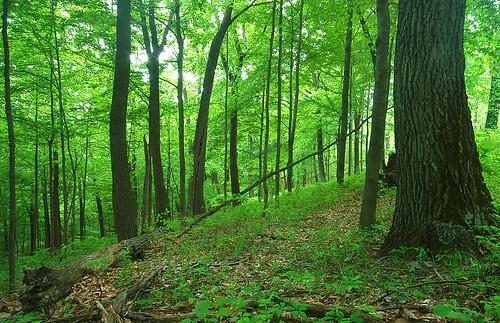 ohio landscape geotagged geo:lat=392395163333332 geo:lon=829574732222223