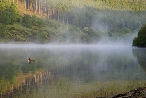 Misty Ladybower