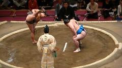 sumo, individual sports, contact sport, sports, combat sport, wrestling,