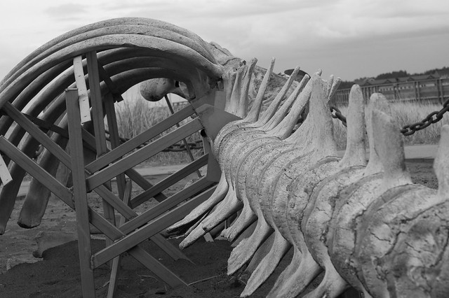 Whale skeleton on beach - photo#20
