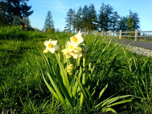 flowers near luscher farm   DSC00089