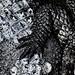 Crocodile tenderness by Eric Lafforgue