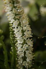 Small white flowers on plant