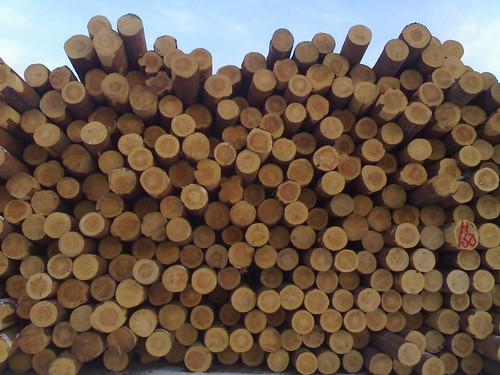 pine suomi finland log timber sawmill saha kyyjärvi mänty puutavara tukki