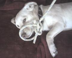 Daily Bean: Bowline Knot