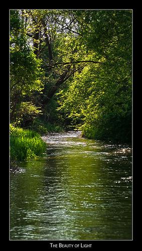 trees sun river austria styria