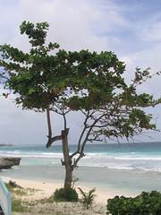018 - Lone Tree