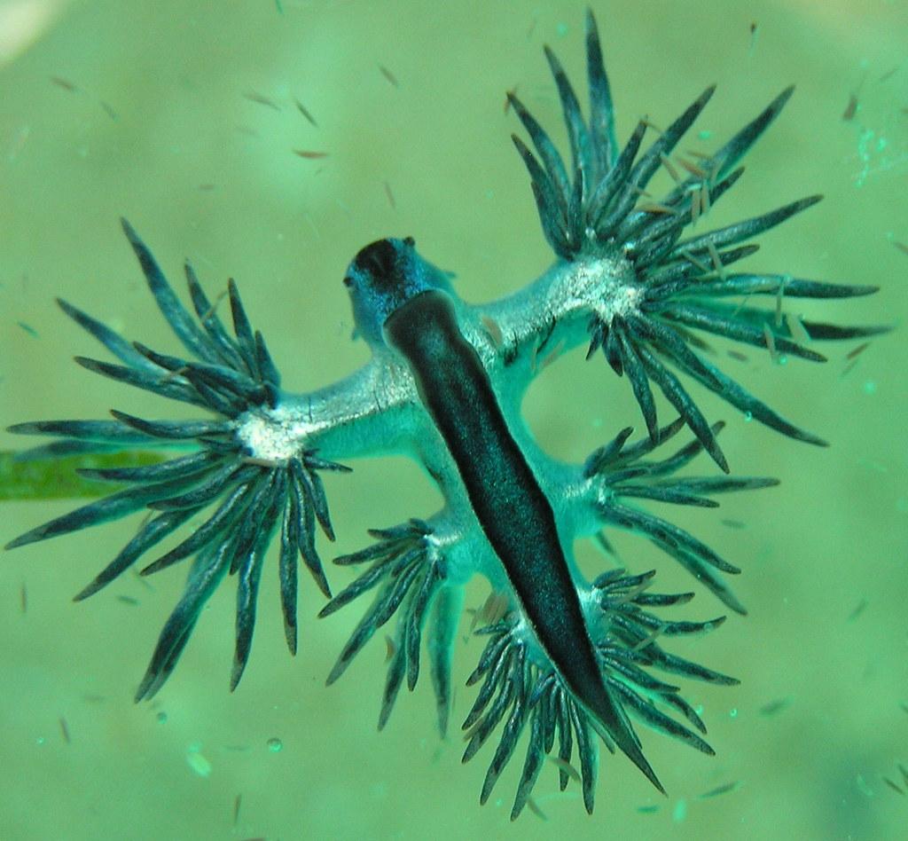 Mollusks - Photo (c) Pierre  Pouliquin, algunos derechos reservados (CC BY-NC)