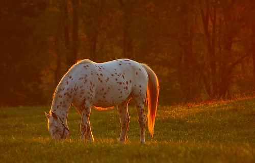 sunset horse glow searchthebest alabama backlit soe pisgah naturesfinest bamawester outstandingshots napg abigfave colorphotoaward 200750plusfaves diamondclassphotographer anequinesunset favescontestwinner