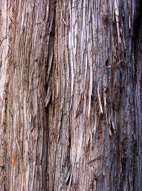 cedar bark | Flickr - Photo Sharing!