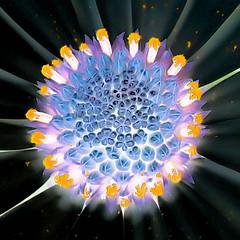 universe(0.0), sunlight(0.0), kaleidoscope(0.0), circle(0.0), symmetry(1.0), fractal art(1.0), flower(1.0), light(1.0), macro photography(1.0),