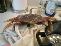 Crab burlesque