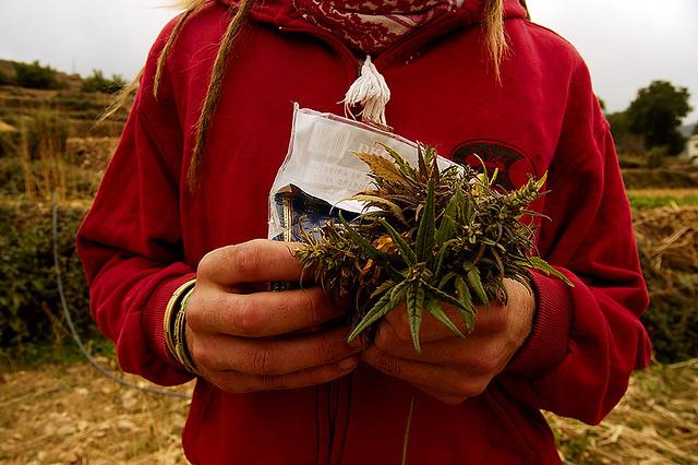 Kif : ganja in Morocco
