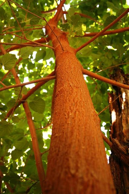wormhole tree