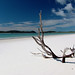Driftwood on Whitehaven Beach, Whitsunday Island, Queensland by BennBeck