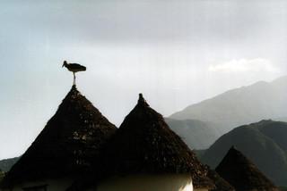 Marabou stork on rondavel roof, Momella Lodge