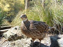 fowl(0.0), ruffed grouse(0.0), animal(1.0), pheasant(1.0), fauna(1.0), beak(1.0), bird(1.0), wildlife(1.0),