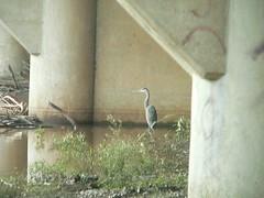 under the concrete