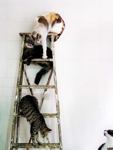 cats on ladder