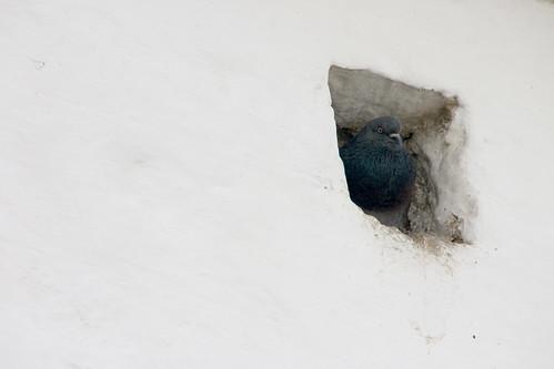 pigeon holed...