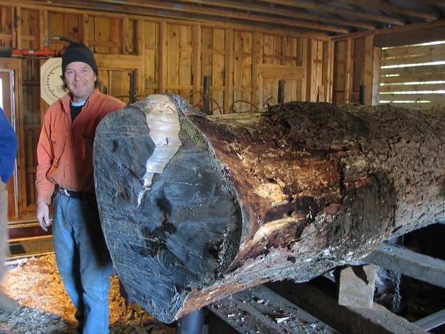 Charlie's big spruce log