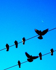 birds on wire with moon