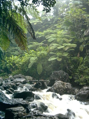 El Yunque Rainforest, Puerto Rico 3