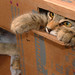 Moka Lounging in her Box by roscodebosco