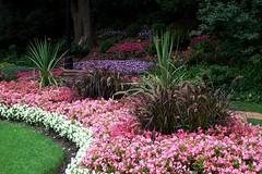 backyard(0.0), woodland(0.0), shrub(1.0), flower(1.0), garden(1.0), grass(1.0), plant(1.0), yard(1.0), landscaping(1.0), landscape(1.0),