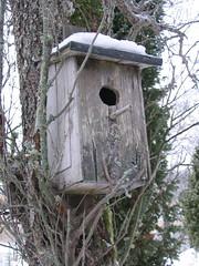 nest(0.0), tree stand(0.0), bird feeder(0.0), outhouse(0.0), bird(0.0), birdhouse(1.0),