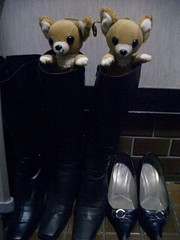 Dogs in the boots