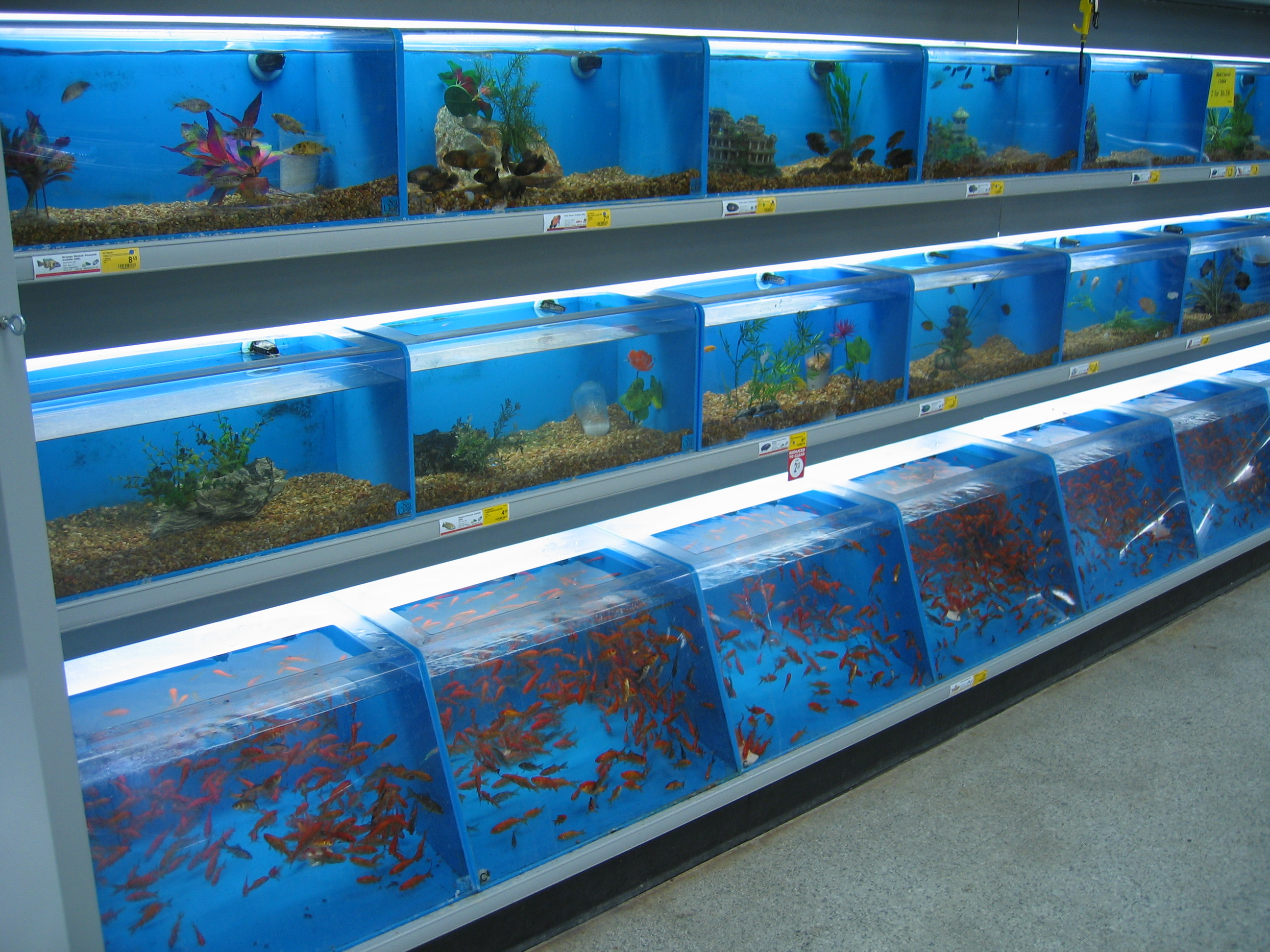 Petsmart fish prison flickr photo sharing for Smart fish tank