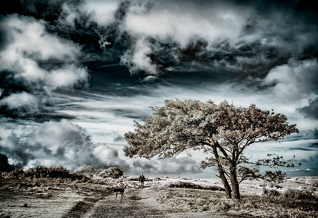 Infrared captured on Luccombe Down