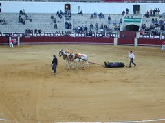 rodeo(0.0), western riding(0.0), equestrian sport(0.0), tradition(0.0), performing arts(0.0), matador(0.0), bullfighting(0.0), barrel racing(0.0), animal sports(1.0), bull(1.0), sport venue(1.0), event(1.0), sports(1.0), bullring(1.0), performance(1.0), arena(1.0), traditional sport(1.0),