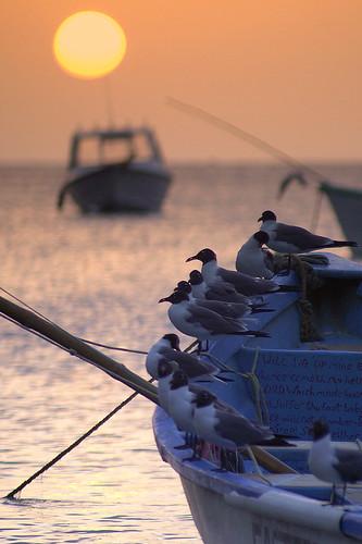sunset bird nature animals tnt animaux oiseau crepuscule tobago charlotteville