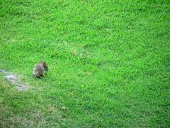 Hilton Head Rabbit