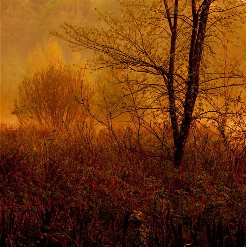 light wild sun mist canada sunrise soleil spring bravo lumière beginning québec marais printemps marshland leverdesoleil sauvage blueribbonwinner magicdonkey outstandingshots deniscollette world100f