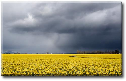 SpringStorm