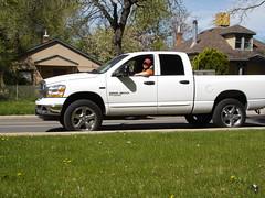 toyota tundra(0.0), chevrolet silverado(0.0), luxury vehicle(0.0), automobile(1.0), automotive exterior(1.0), pickup truck(1.0), dodge ram rumble bee(1.0), wheel(1.0), vehicle(1.0), truck(1.0), bumper(1.0), land vehicle(1.0),