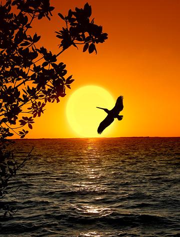 Key Largo- Sunset