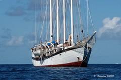 Windjammer S.V. Polynesia