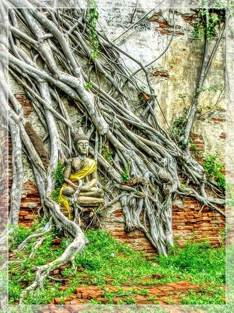 Roots, Nikon COOLPIX L1