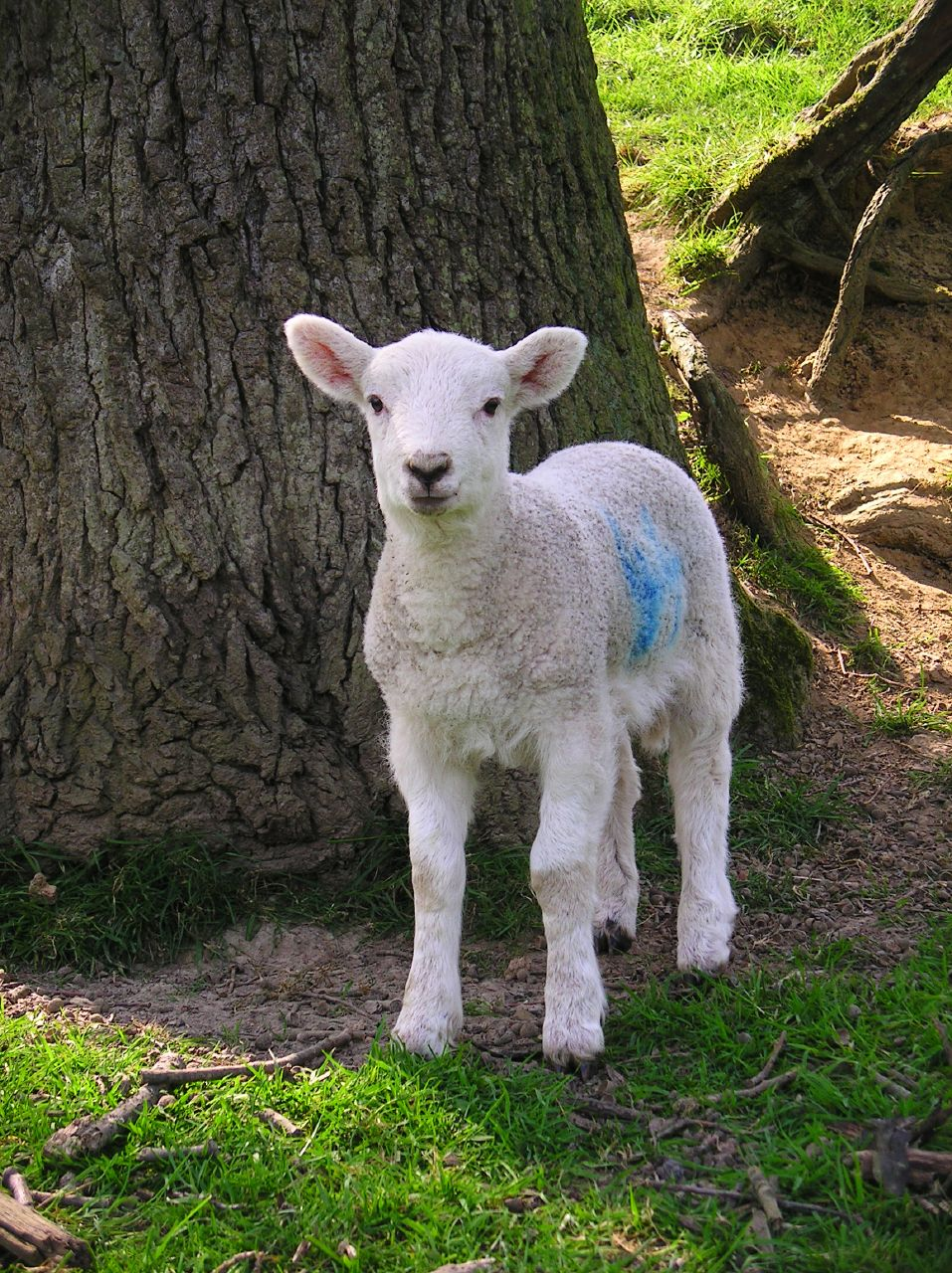 "Book 1, Walk 15, Leigh to Tunbridge Wells 3 ""I am not a number, I am a free lamb."" 14 April '07"