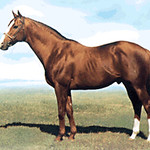 SHARPEN UP (GB) 1969. Chestnut Horse
