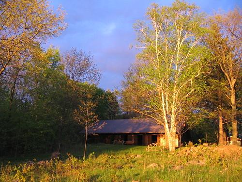 trees sunset camp ontario canada neekaunis