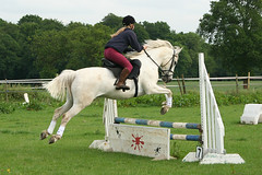 animal sports, equestrianism, english riding, modern pentathlon, eventing, mare, stallion, show jumping, hunt seat, equestrian sport, sports, recreation, outdoor recreation, equitation, horse, pasture, person,
