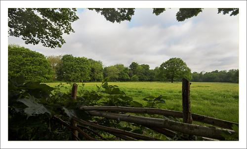 Kenley Common IMG_1297-01