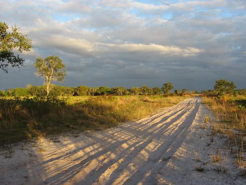 light evening sand florida sarasota myakkastatepark